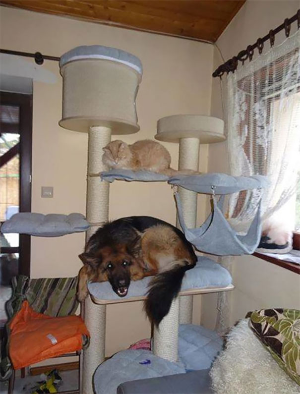 When Dog Spends Too Much Time With Cat