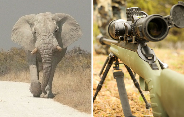 Big Game Hunter Gets Killed By Elephant He Was Trying To Shoot, And Here's How Internet Reacts