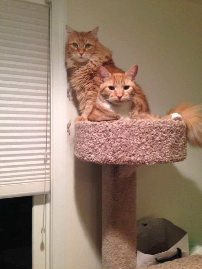 Two Cats Sitting In A Cat Tree