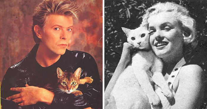 15 Famous People And Their Cats Bored Panda