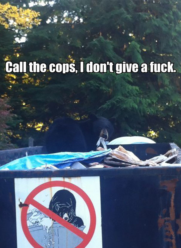 Because Bears Are Rebels