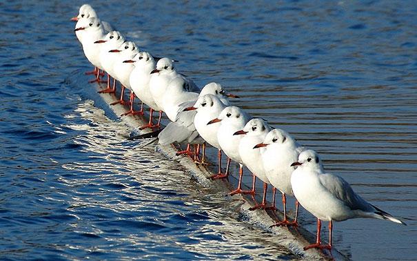 Rebellious Seagull