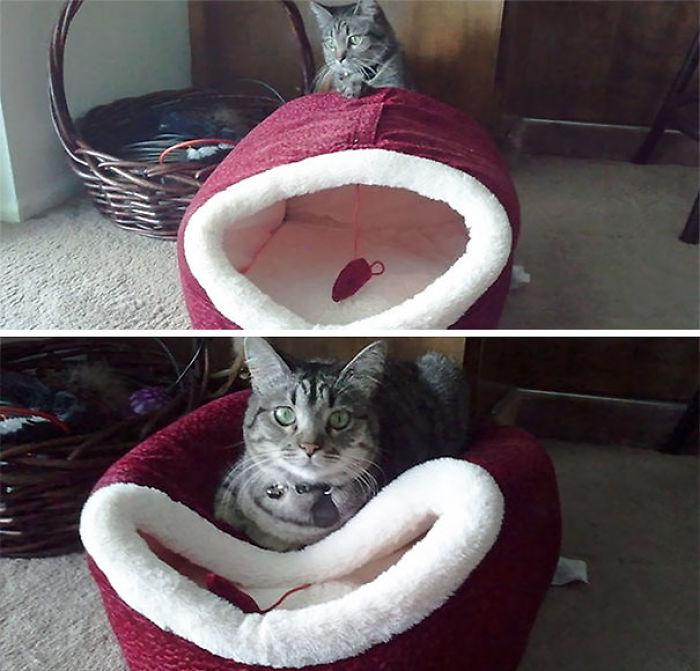 F*ck You I'm A Cat