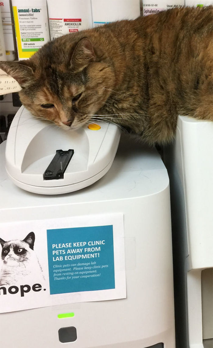 Clinic Cat Doesn't Care About The New Sign