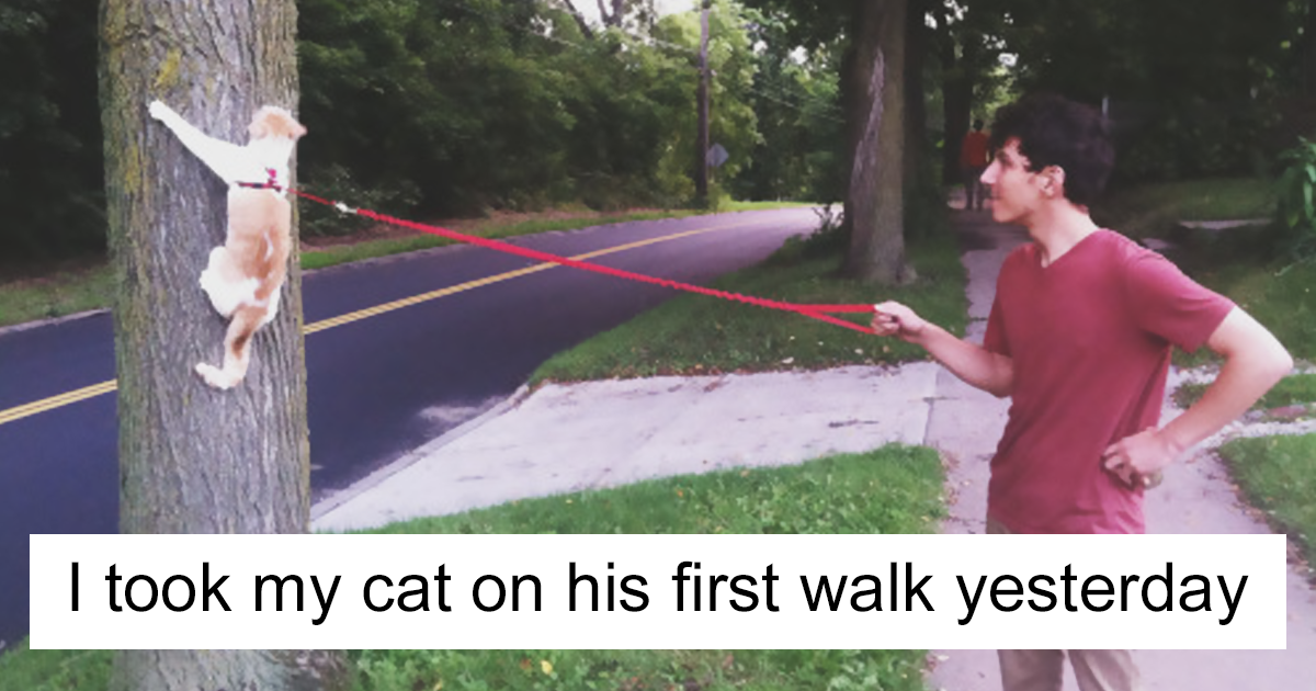 10+ Cat Posts On Tumblr That Are Impossible Not To Laugh At