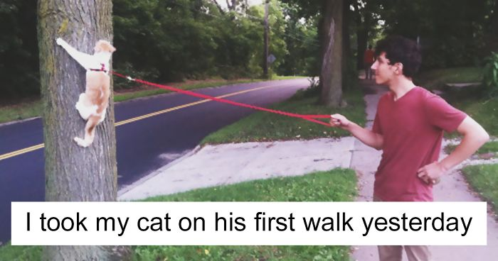 Cat Posts On Tumblr That Are Impossible Not To Laugh At - 20 times tumblr made everyone laugh at america