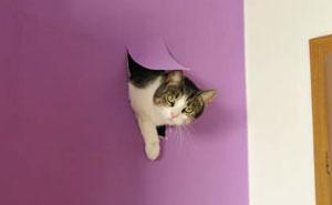 10+ Publicaciones sobre gatos en Tumblr de las que es imposible no reírse (2ª parte)