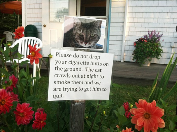 Bad Habit Cat