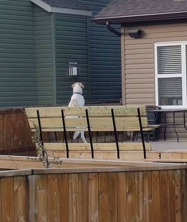 Mom Looked Out The Window And Saw Her Neighbours Dog Sitting Like This
