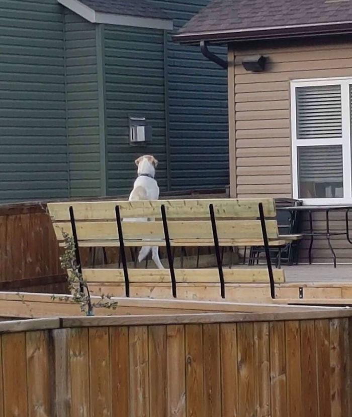 El perro del vecino se sienta así