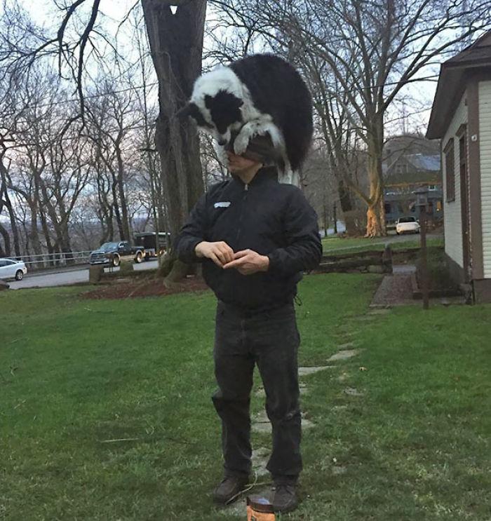 Mi vecino tiene una forma extraña de presentarme a su perro