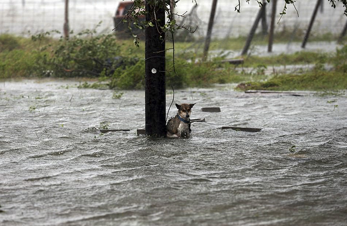 Some People Left Their Dogs Tied Up To Die In The Flood And It - Some people tied their dogs up and left them to die during the flood