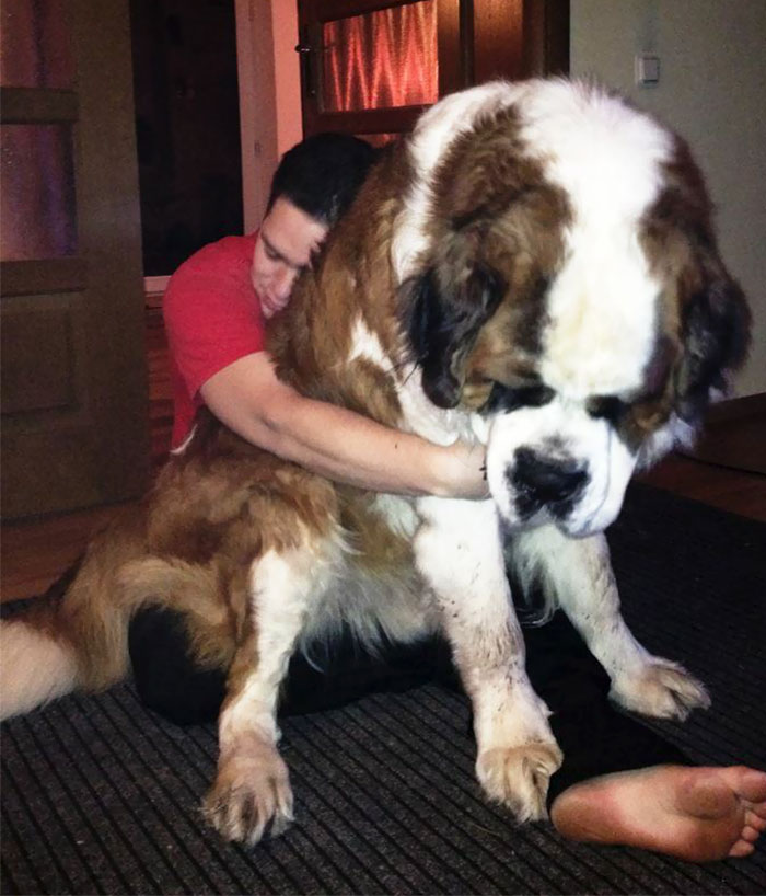 My Friends Giant Dog. Seriously, GIANT