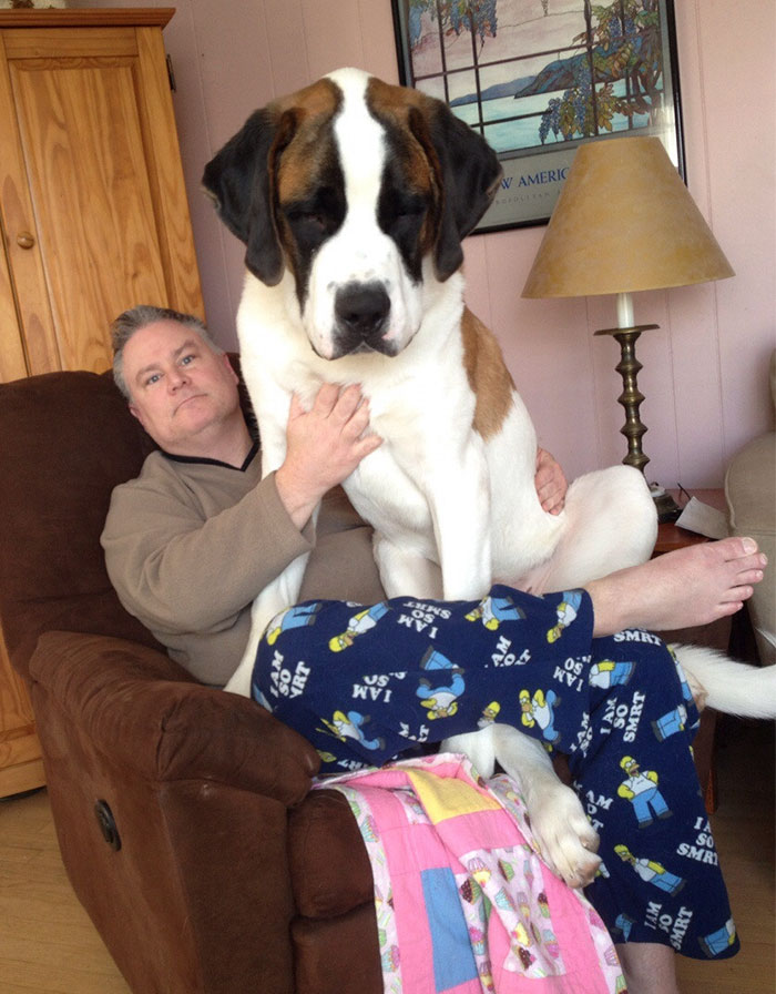 Our 11-Month-Old, 130 Pound Lap Dog Simba