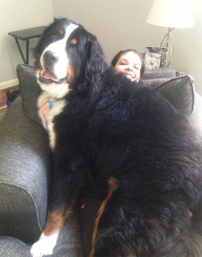 This Is Lincoln, He's Bigger Than My Wife