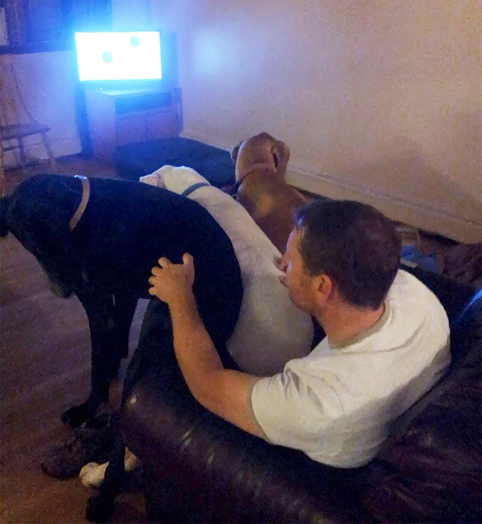 My Parents Have 3 Great Danes That All Love Sit On My Dad's Lap And Often Fight Over It. This Is The Only Time They'll Ever Do This