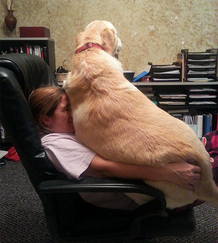 He Thinks He's A Lapdog...