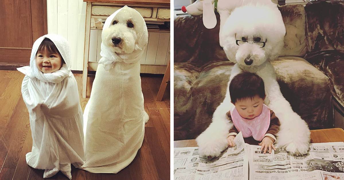This Little Japanese Girl And Her Pet Poodle Will Make Your Day
