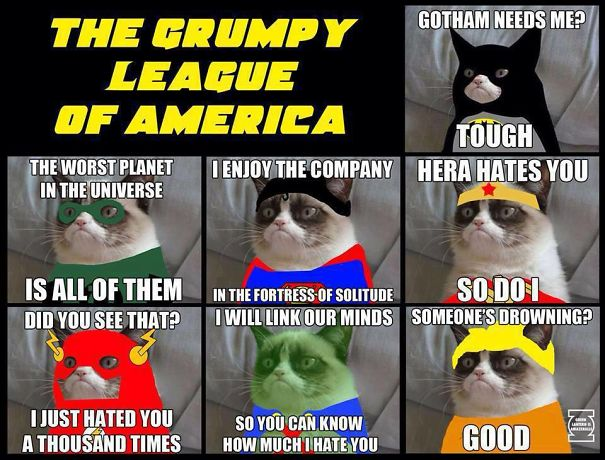 grumpy-cat-league-599bf11a29337.jpg