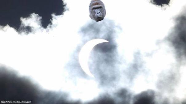 harambe-solar-eclipse-copy-599c58cf8e388.jpg