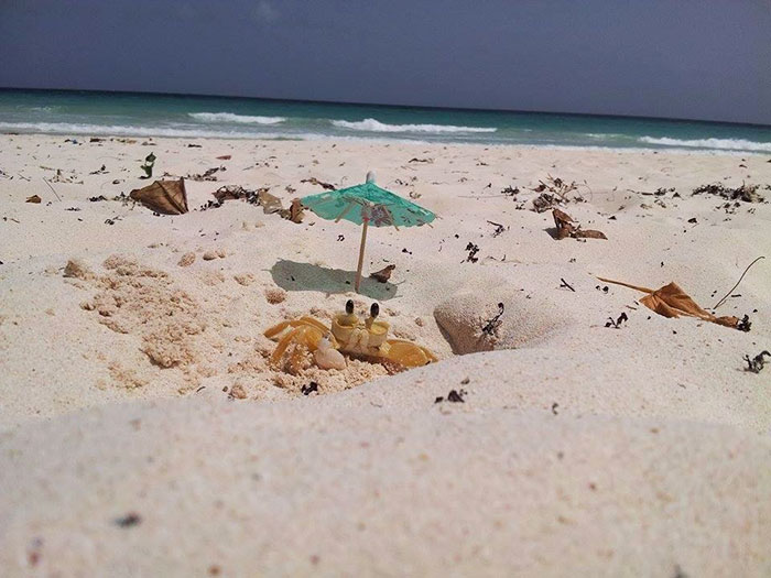 husband-takes-picture-funny-crab-beach-umbrella-2