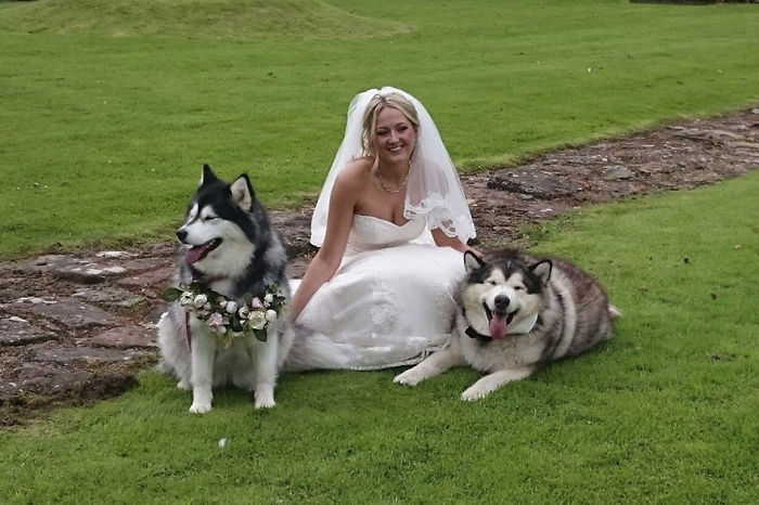 Couple Makes Their Malamutes Best Man And Maid Of Honor For Their Wedding And It's Too Cute