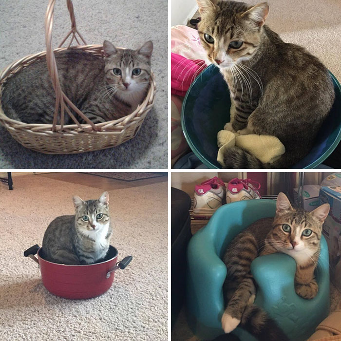 The Many Sits Of Geeky