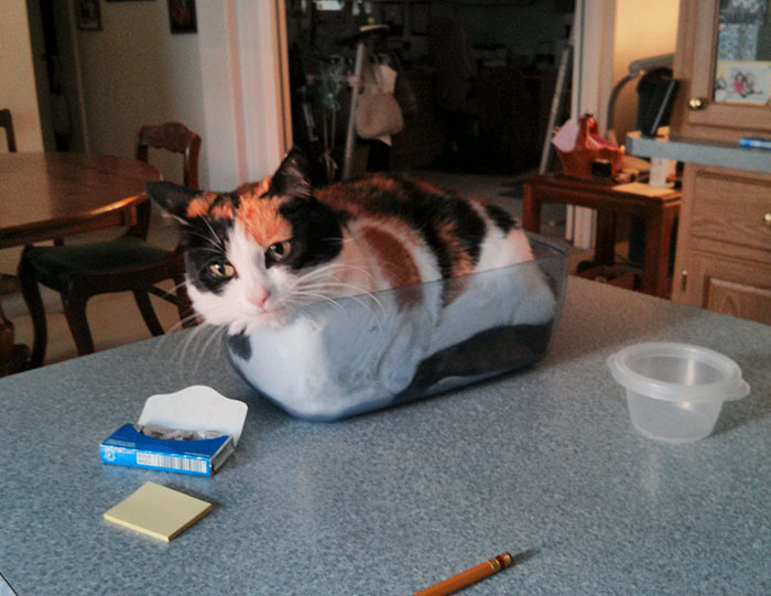 I Fits, I Sits. The Dish Is There Specifically For The Cat And Is Not Used For Any Other Purpose
