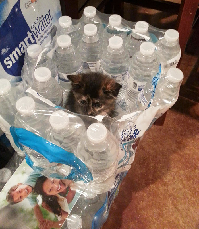 """She's Starting Her """"If I Fits, I Sits"""" Early"""