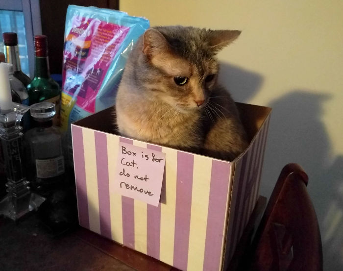 Box Is For Cat. Do Not Remove