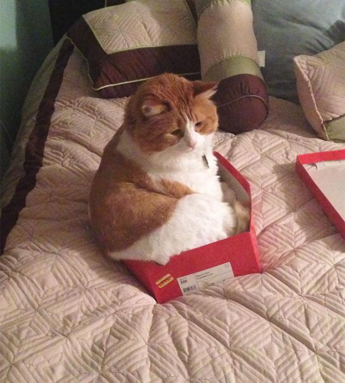If I Don't Fits, I Still Sits