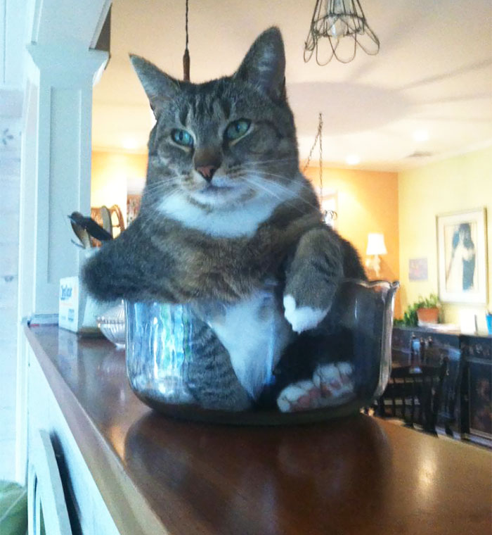 My Cat Likes To Sit In Small Bowls