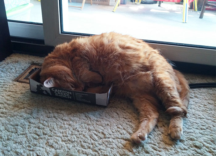When My Cat Doesn't Fit... No F*cks Are Given
