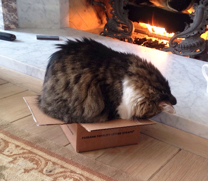 My Cat Wouldn't Accept The Fact That The Box Was Too Small For Him