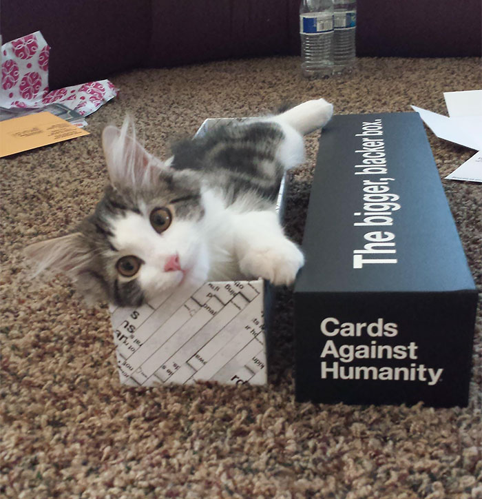 Got The Bigger, Blacker Box Today In The Mail. My Cat Was Thrilled