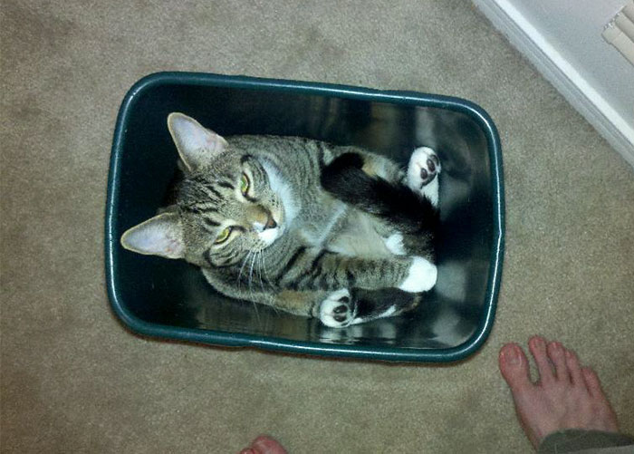 My Cat Likes To Sleep In Garbage Cans