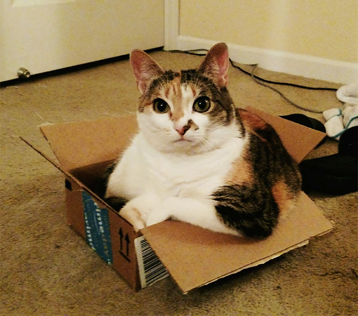 Why Yes, I Fit, I Sit
