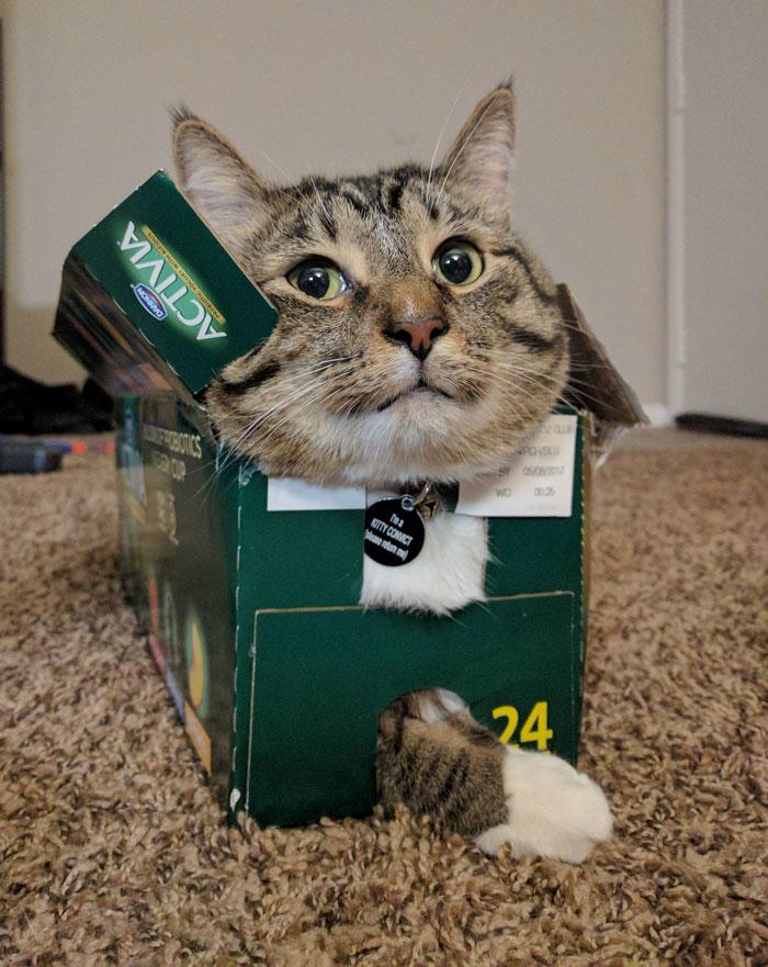 fotos de gatos locos