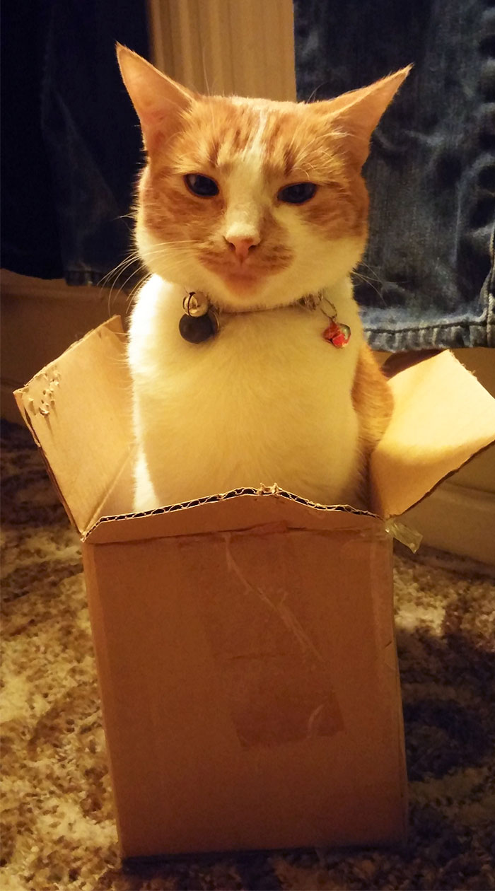Amazing How Your Cat Can Sit In A Box And Still Make You Feel Like The Stupid One
