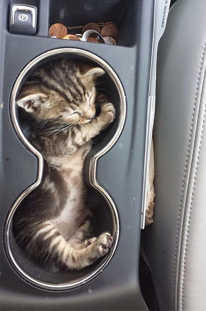 If I Fits, I Naps