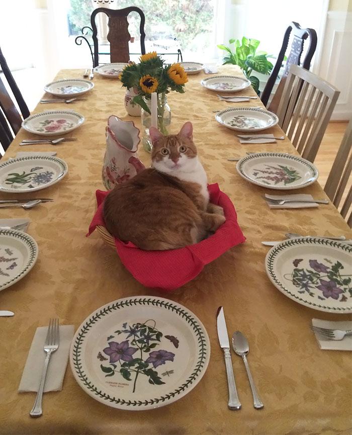 If I Fits, I Sits - My Fat Cat Edition