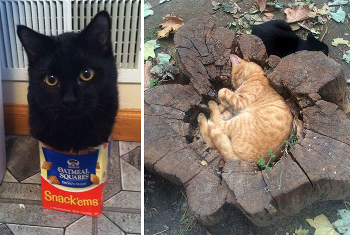 """10+ Times Cats Said """"If It Fits, I Sits"""" And Proved Themselves Right"""