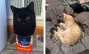"""10+ Gatos que dijeron """"si quepo, me siento"""" y demostraron tener razón"""
