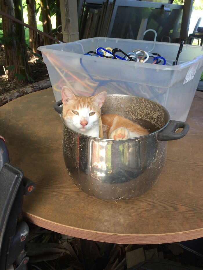 Chilling In A Bowl