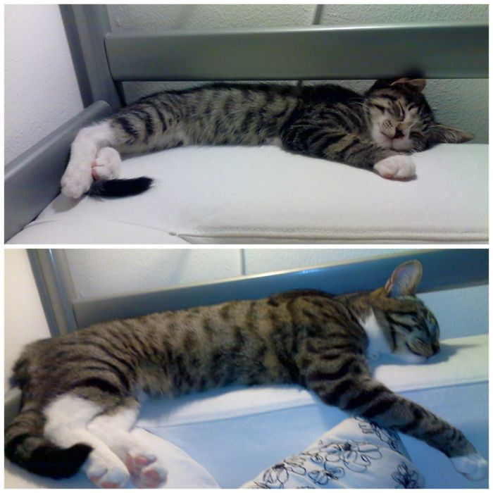 This Is What Happens To A Kitty When You Pour Love All Over It For 6 Months!
