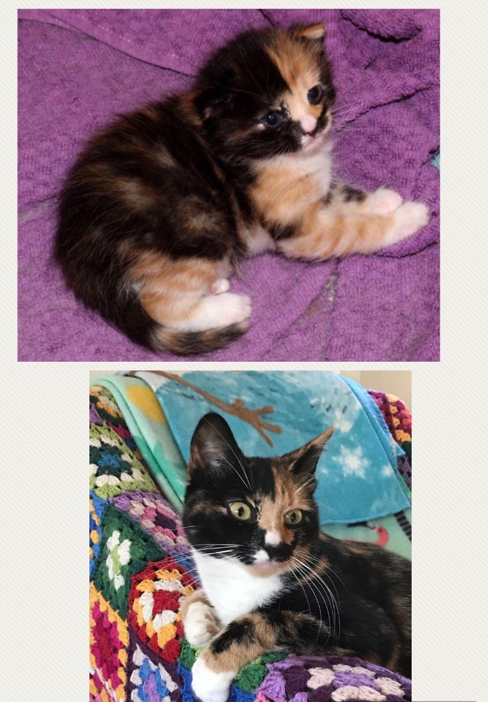 Vera The Very Very Tiny Kitty, Having Just Opened Her Eyes, And Then 1,5 Years Later. Stol