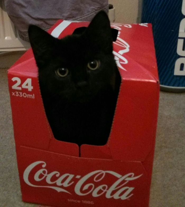 Other Fizzy Drinks Are Available