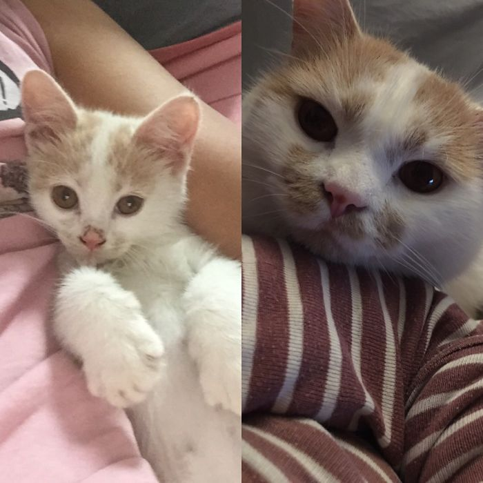 Our Adopted Stray Cat Leo In 2015 And Now