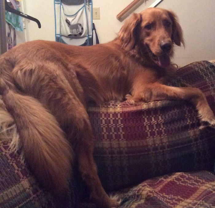 He Thinks He's A Cat At 120 Lbs...