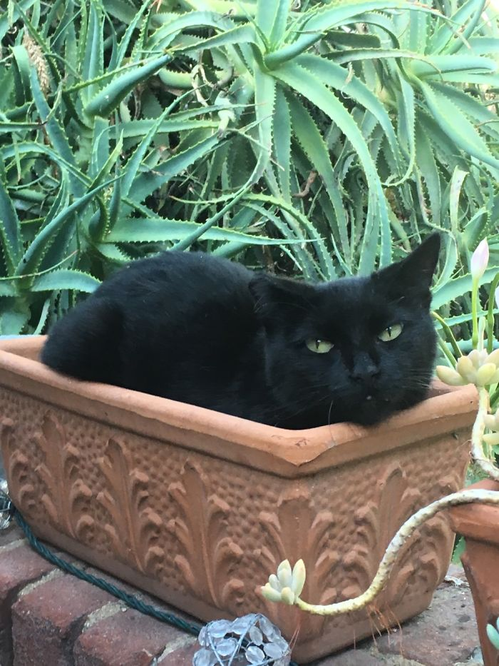 My Friend's Cat Did Not Want To Be Bothered In Her Peaceful Pot